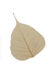 Set of 25 bodhi leaves