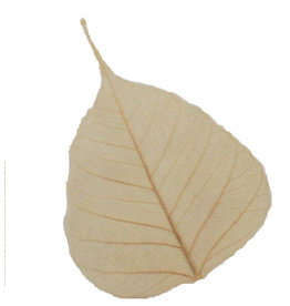 NE510 Set of 25 bodhi leaves