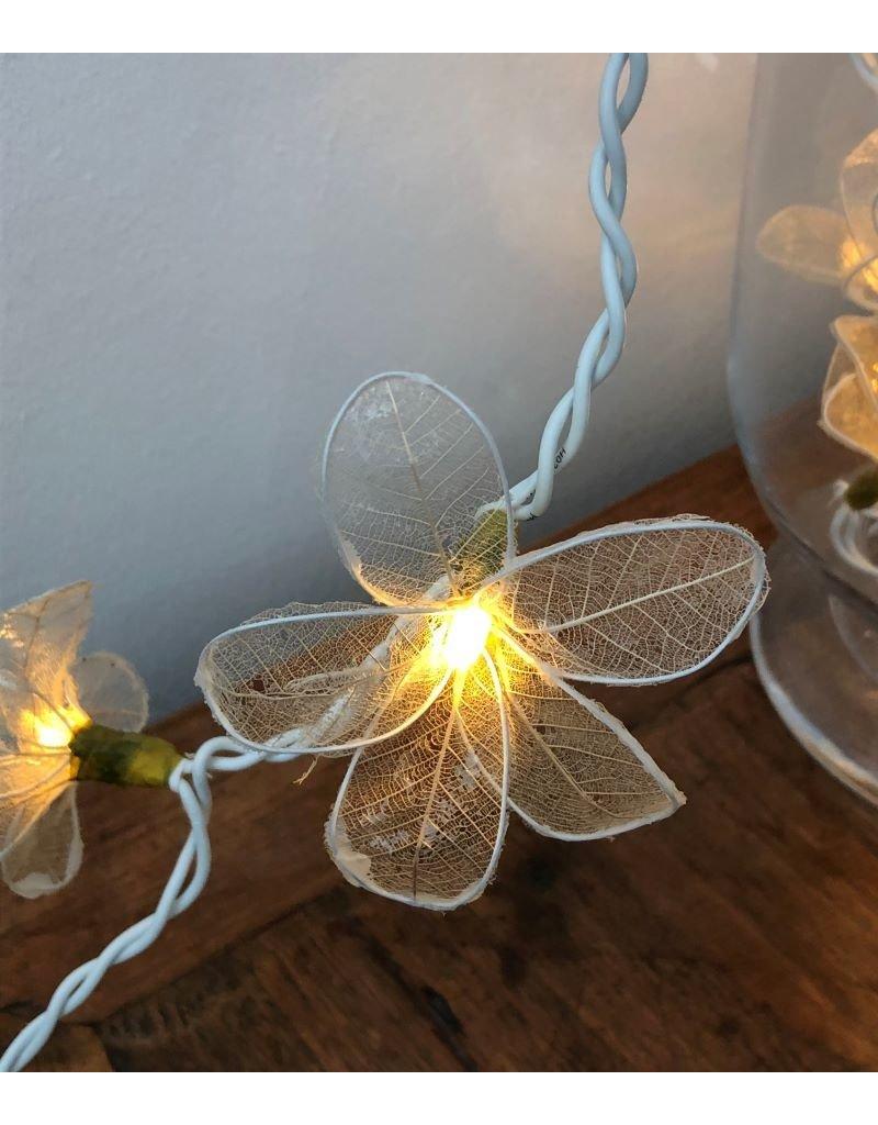 . lichtslinger nerfblad-bloemen