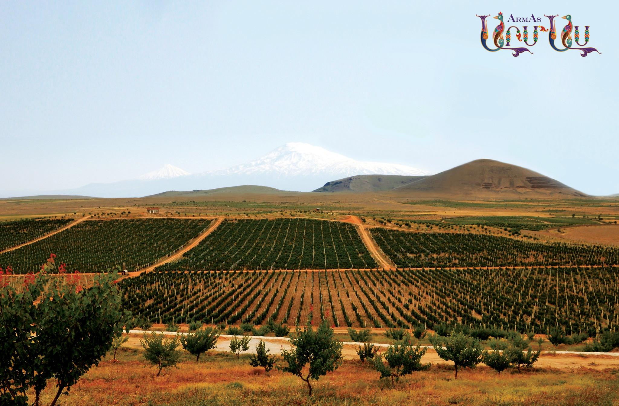 Wijngaard in woestijn