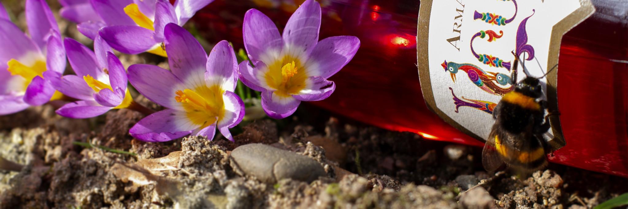 Dijso Spring