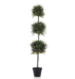 Emerald Buxus drievoudig 145 cm