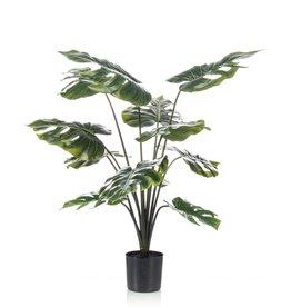 Emerald Gatenplant in pot 98 cm