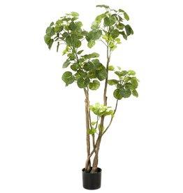 Emerald Kunstboom aralia 135 cm 420292