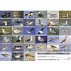 Vogelzoekkaart