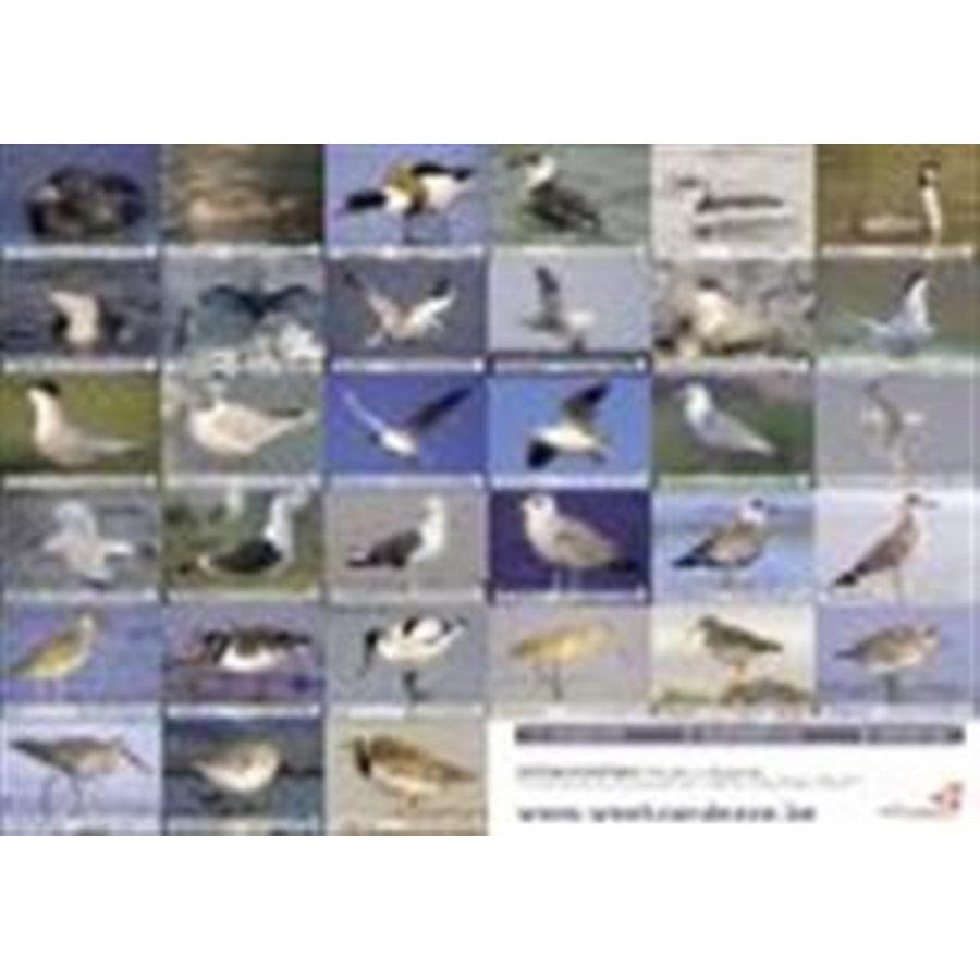 Vogelzoekkaart-1