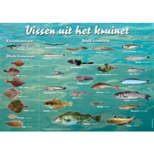 Viszoekkaart - vissen uit het kruinet