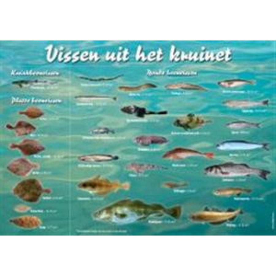 Viszoekkaart - vissen uit het kruinet-1