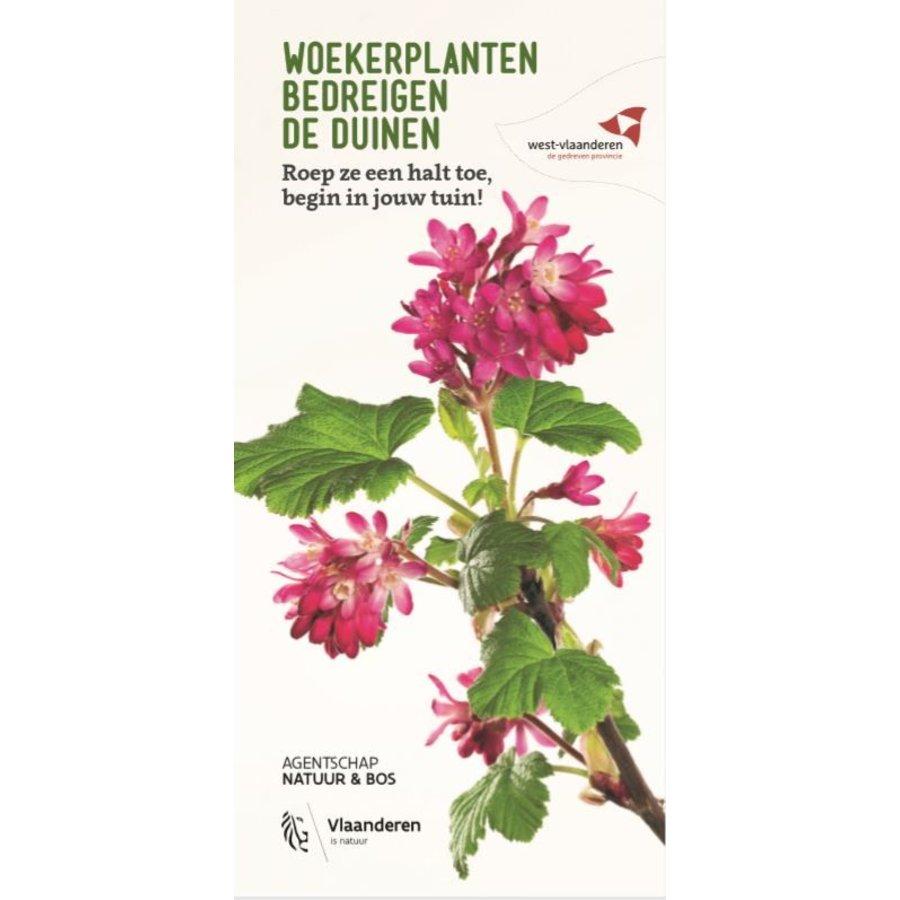 Woekerplanten bedreigen de duinen-1
