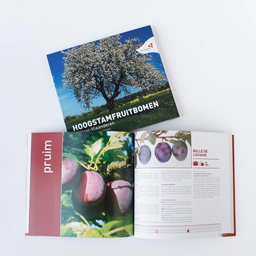 Hoogstamfruitbomen-2