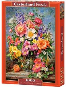 Castorland June flowers in radiance
