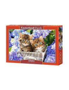 Castorland Cute kittens 1500 stukjes