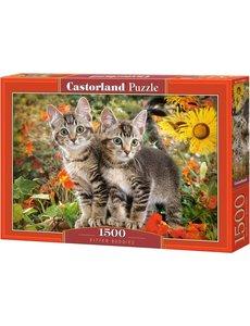 Kitten Buddies, 1500 st.