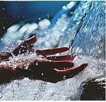 Waterbehandeling Zwembad