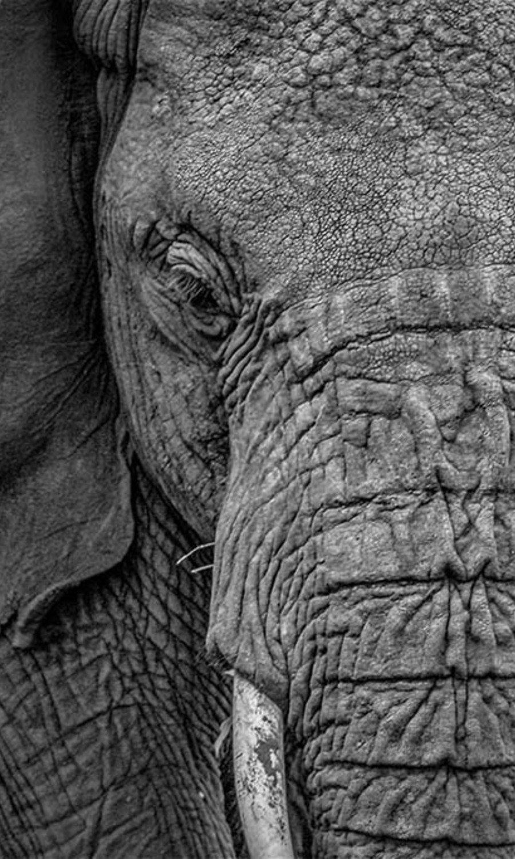 Close-up Elephant