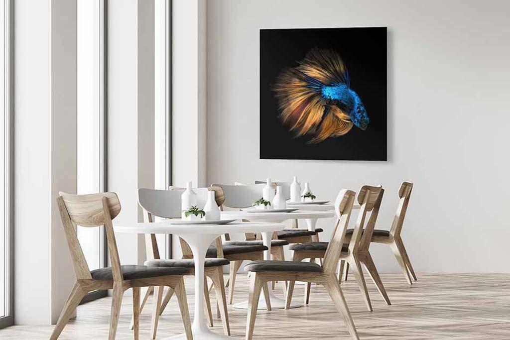 Betta fish-4