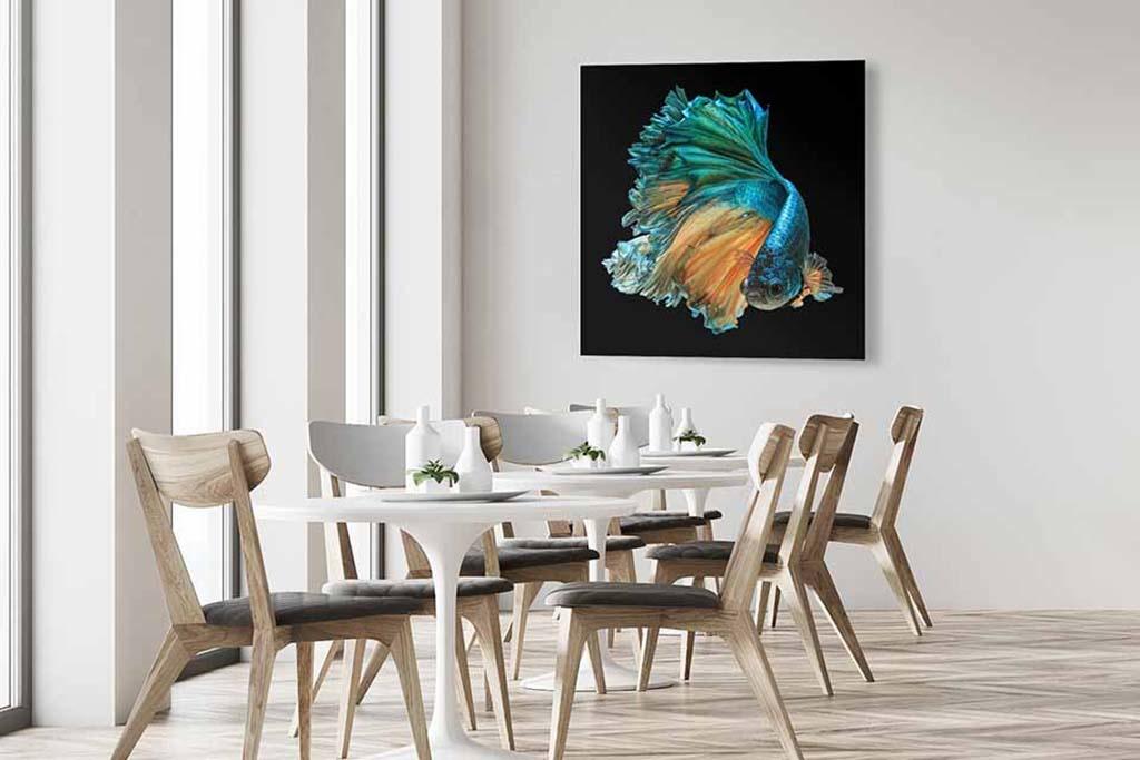 Aquarium-5