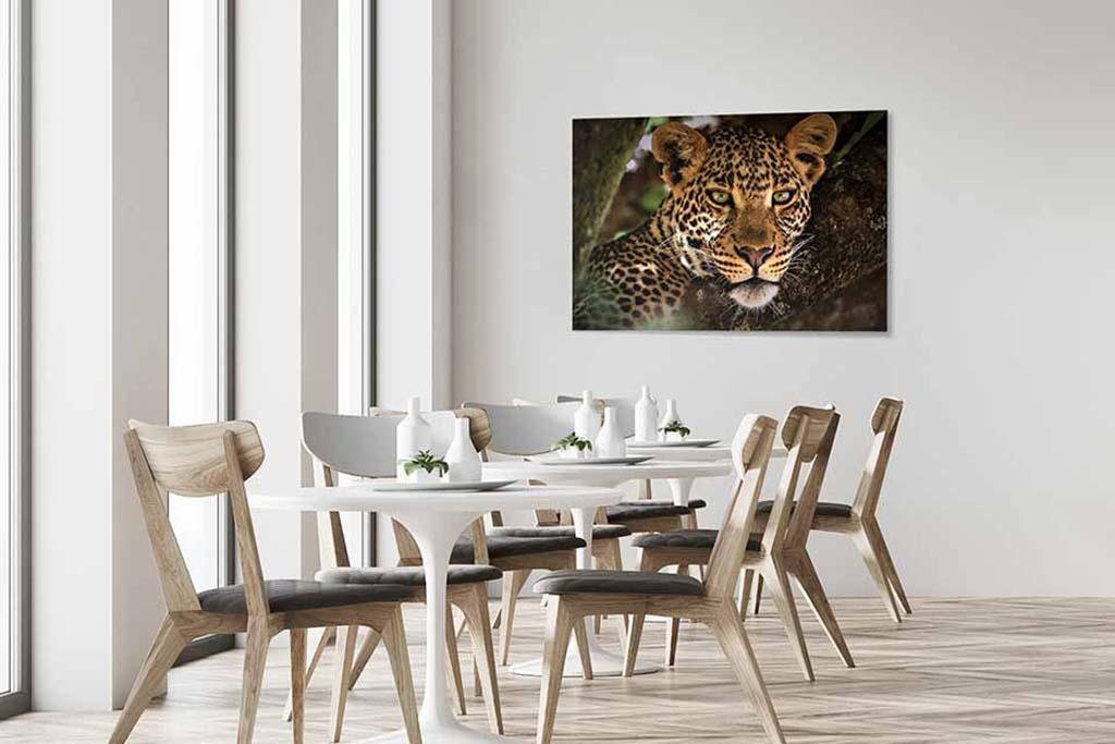 Panther-4