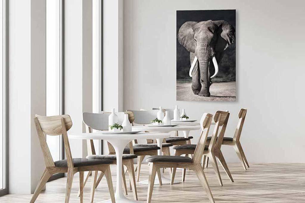 Elephant approaching-5