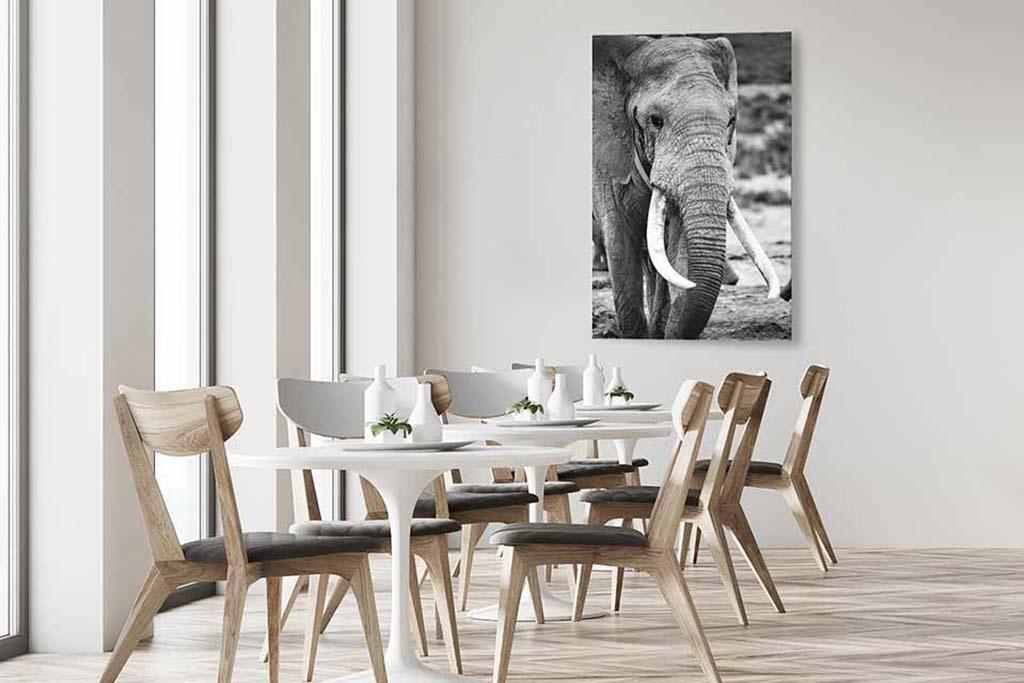 Elephant zw-4
