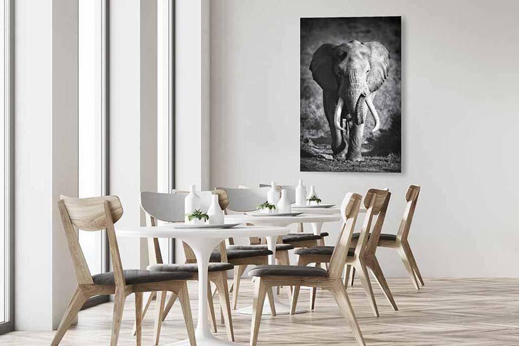 Elephant bull-4
