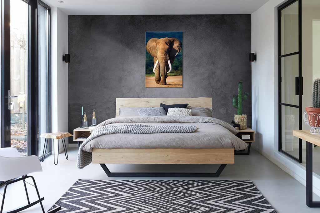 Eléphant de couleur-3
