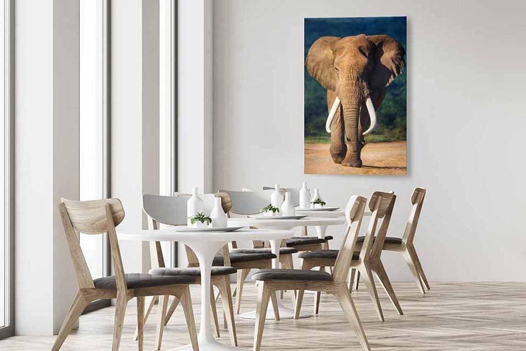 Eléphant de couleur-5