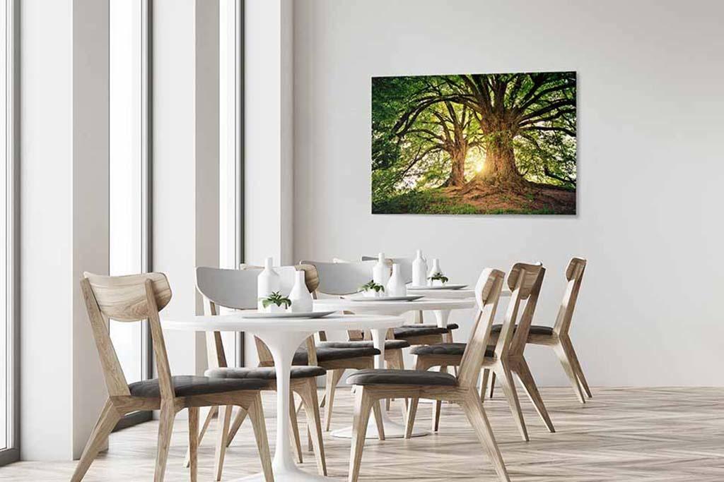 Old tree-4