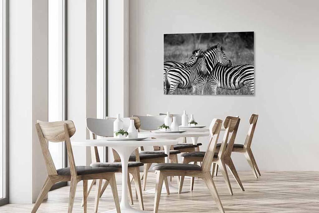Zebras-4