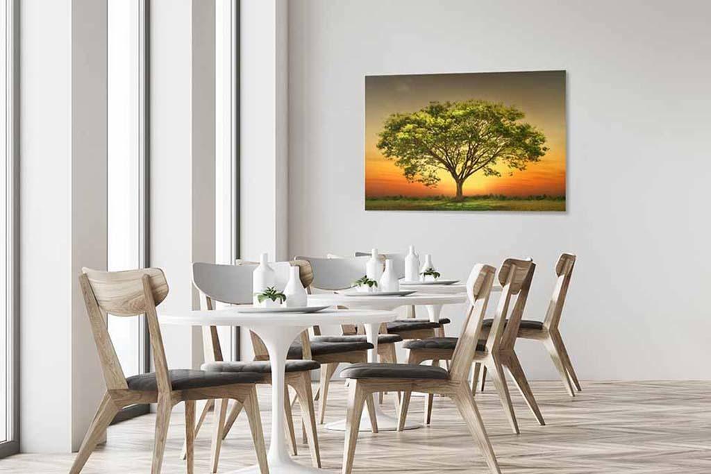 Sunset tree-4