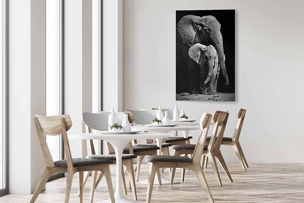 Elephants-4