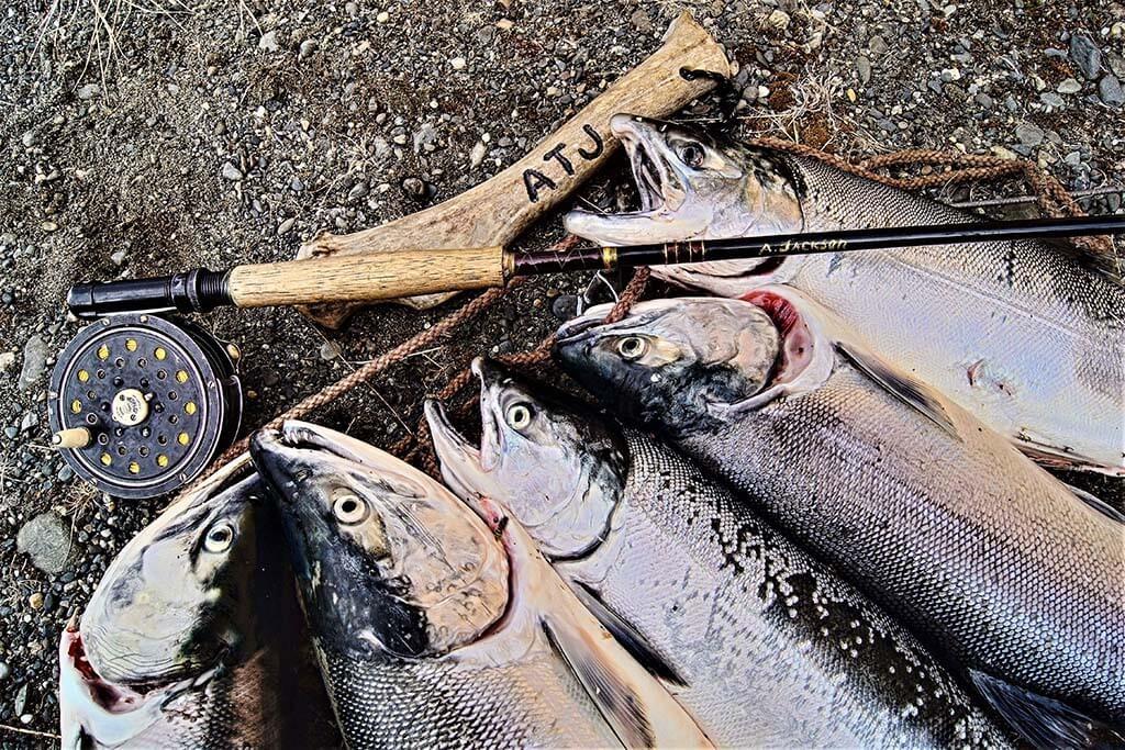 Salmon-1