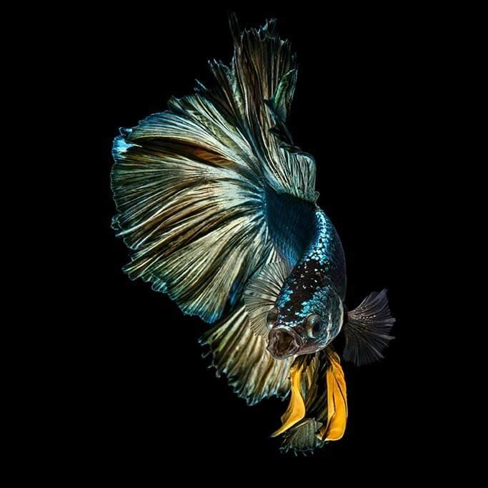 Happy fish-1