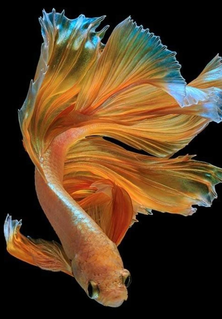 Tail fish