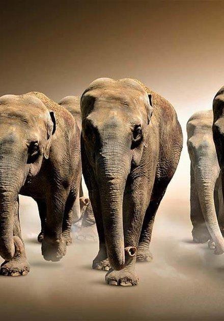 Le groupe des éléphants