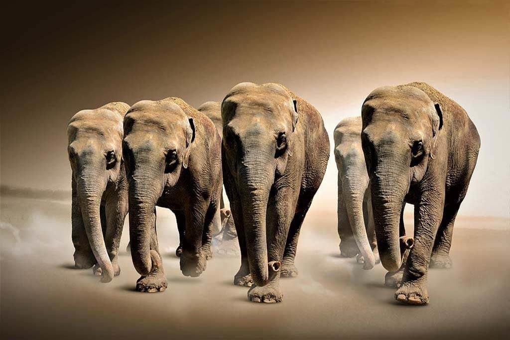 The elephant group-1