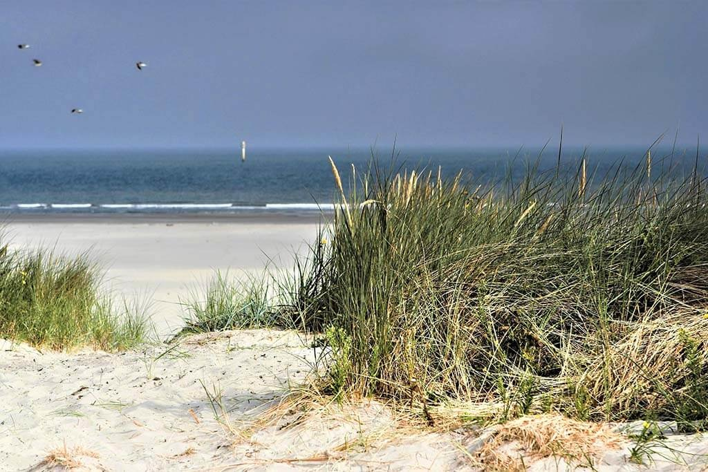 Les dunes néerlandaises-1