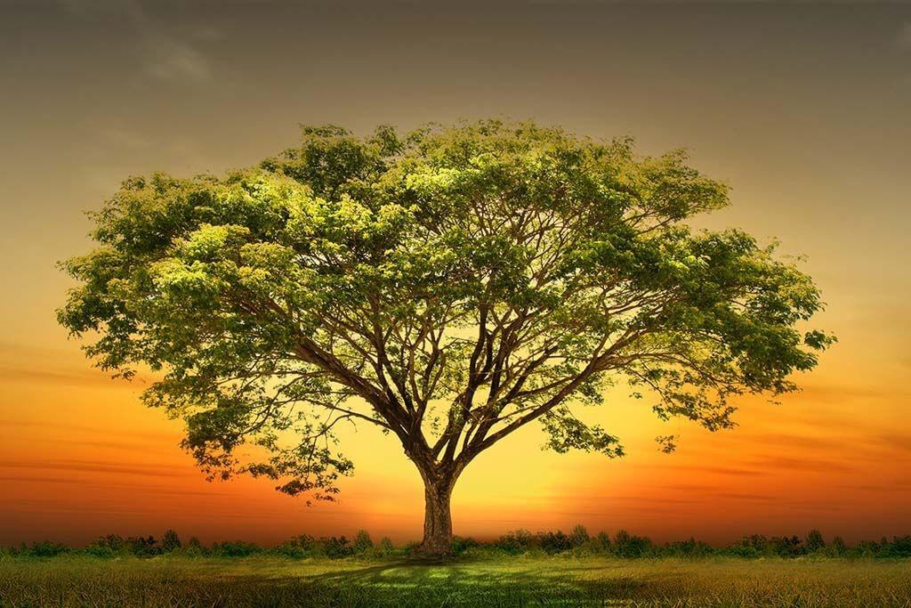 Sunset tree-1