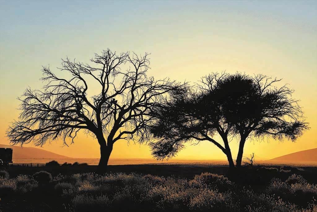 Desert trees-1