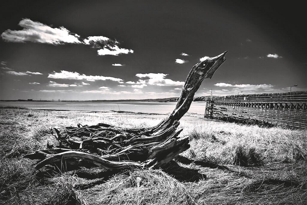 Driftwood at coast