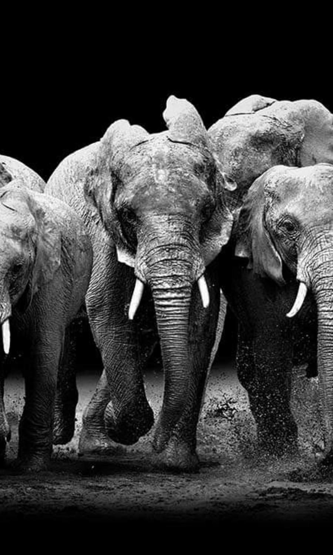 The Elephants Group