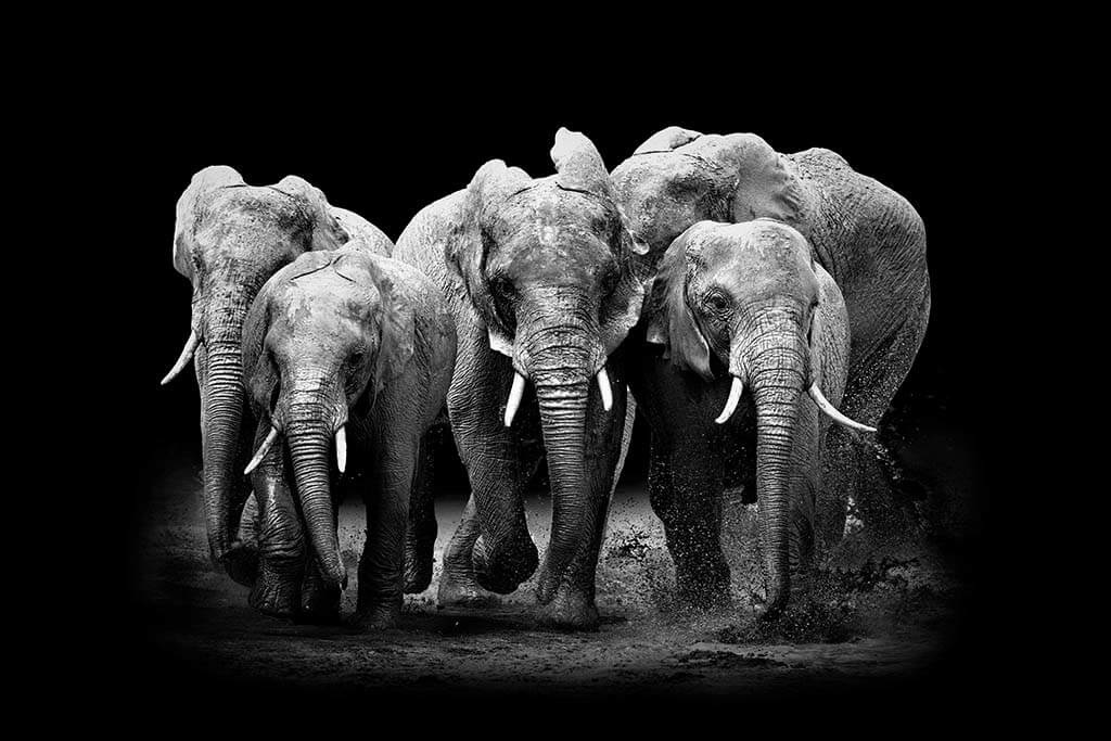 The Elephants Group