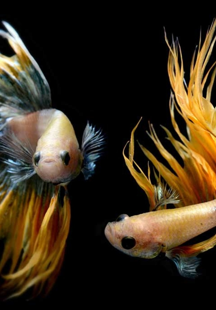 Happy Fishes
