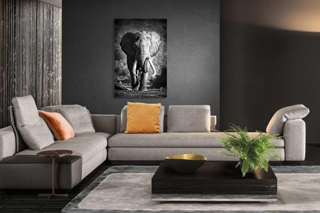 Elephant bull-2
