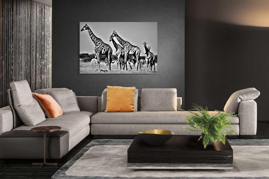 Giraffes Botswana-2