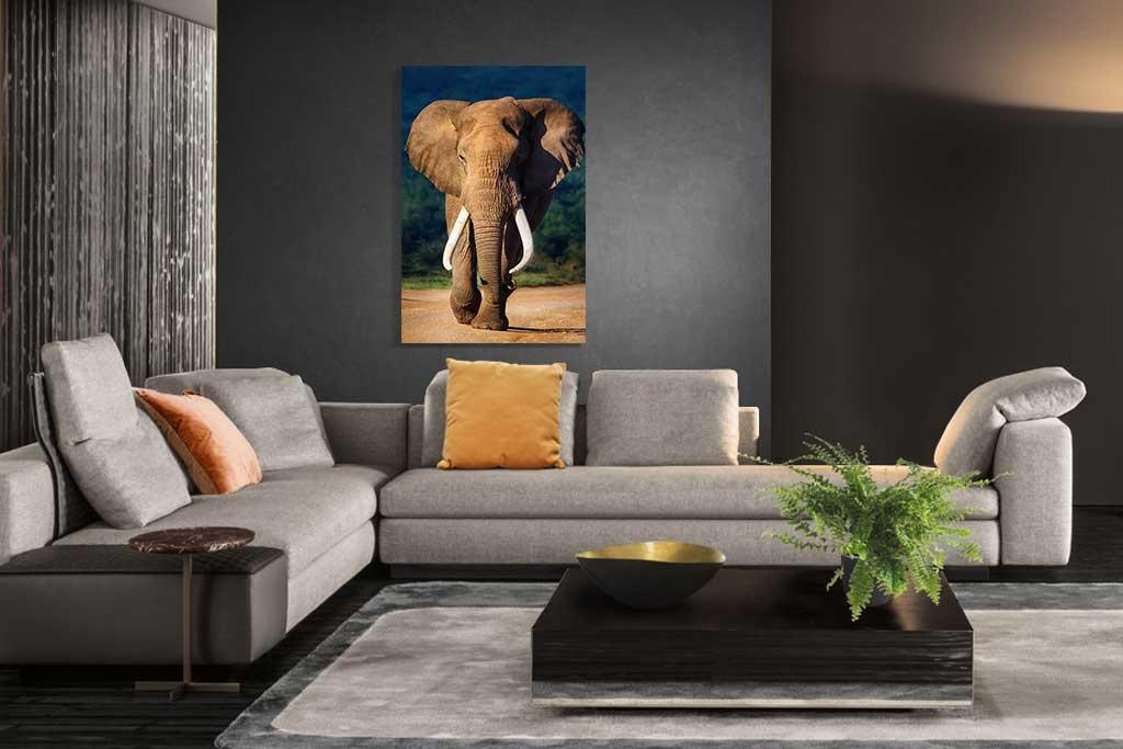 Eléphant de couleur-4