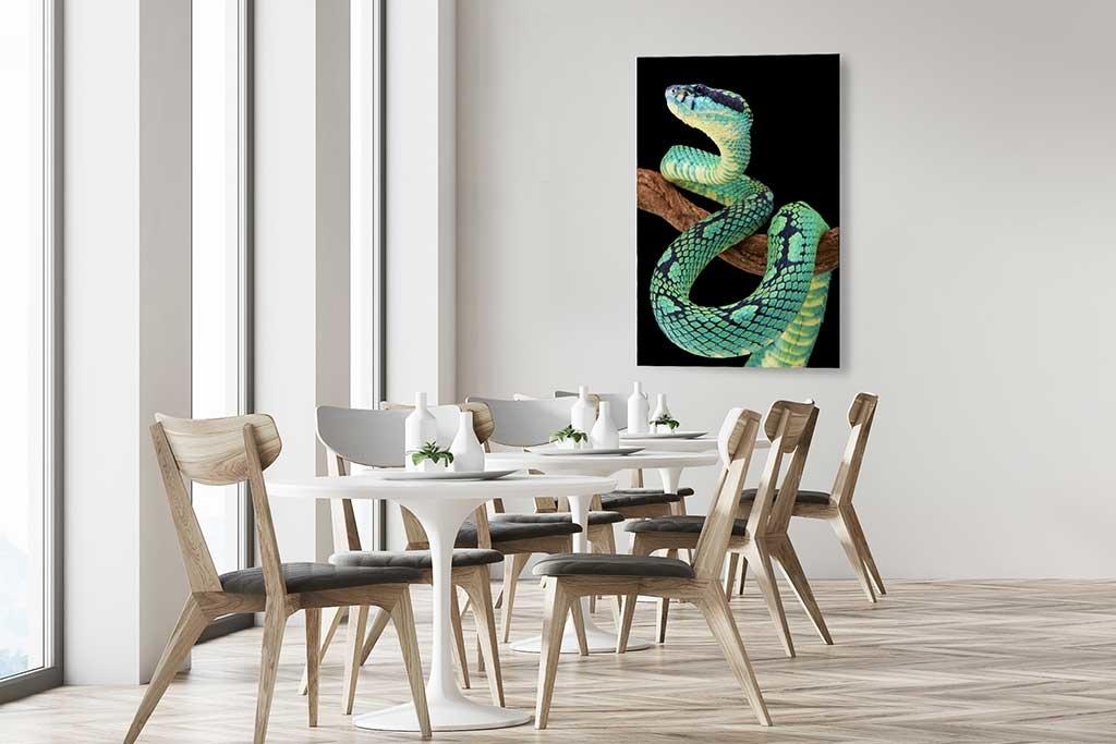 Sri Lankan pit viper-3