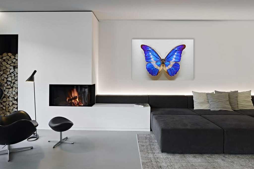 Butterfly blue-2