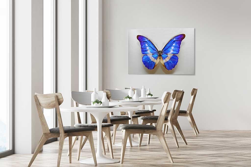 Butterfly blue-4