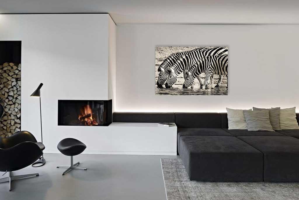 Steppe zebras-2